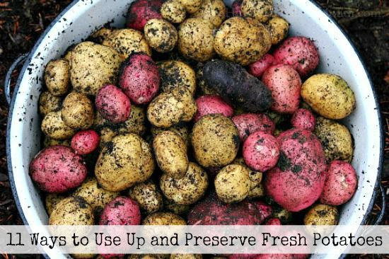 11 Ways to Use Up and Preserve Fresh Potatoes