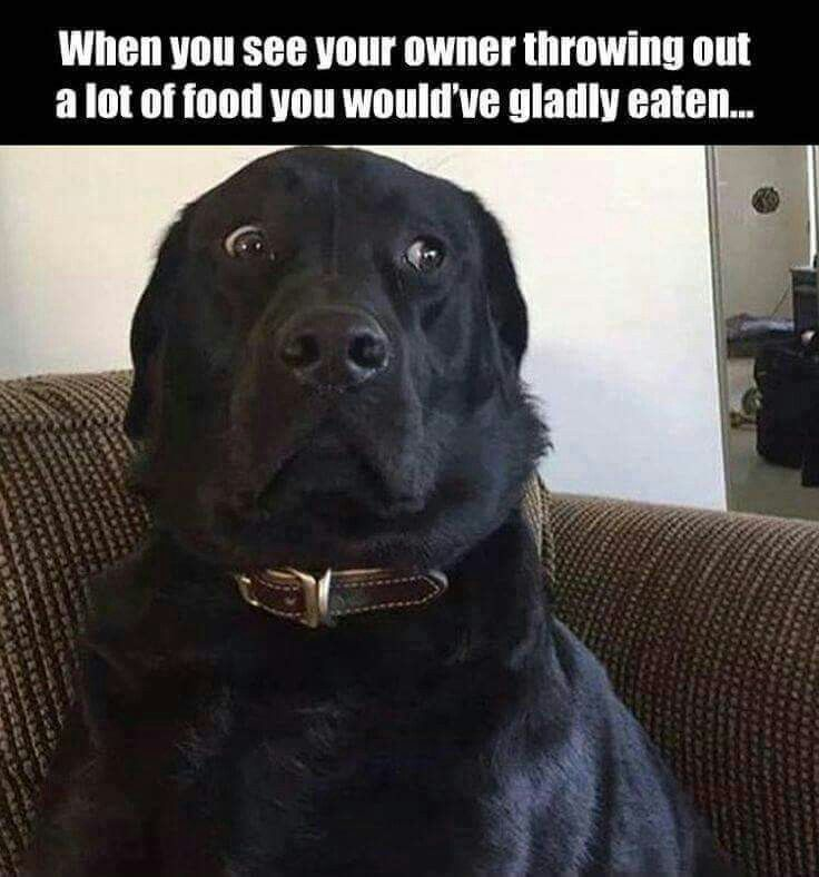 25 Best Ideas About Funny Labradors On Pinterest Labs