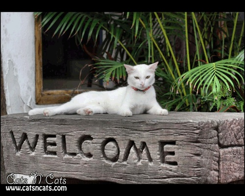 white-cat-laying-above-welcome-wooden-sign
