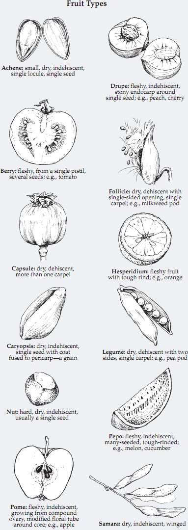 Fruit Types