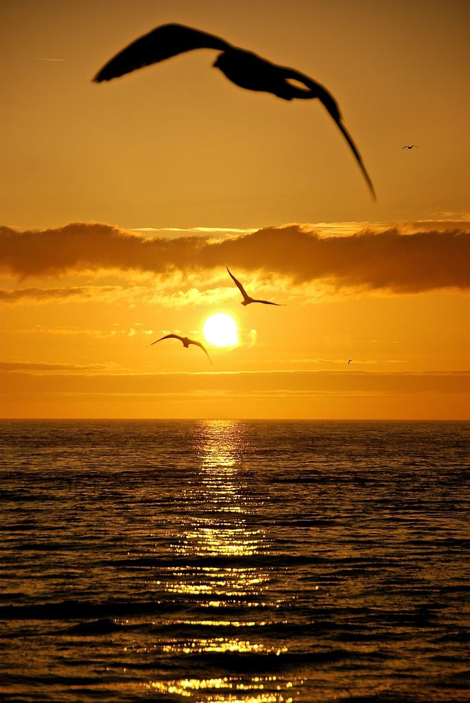 Seagulls flying over the ocean. #sunset #nature #photography