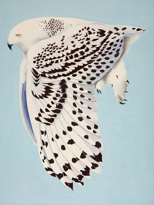 Snowy Owl, Egg tempera on panel         The Ghost of Captain Walker Sequin, Monhegan, 2014, Watercolor and gouache on paper        Gl...