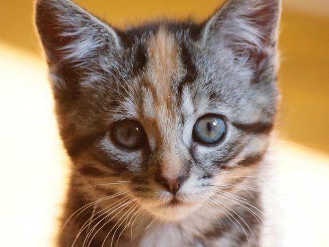 Make America a kitten world.