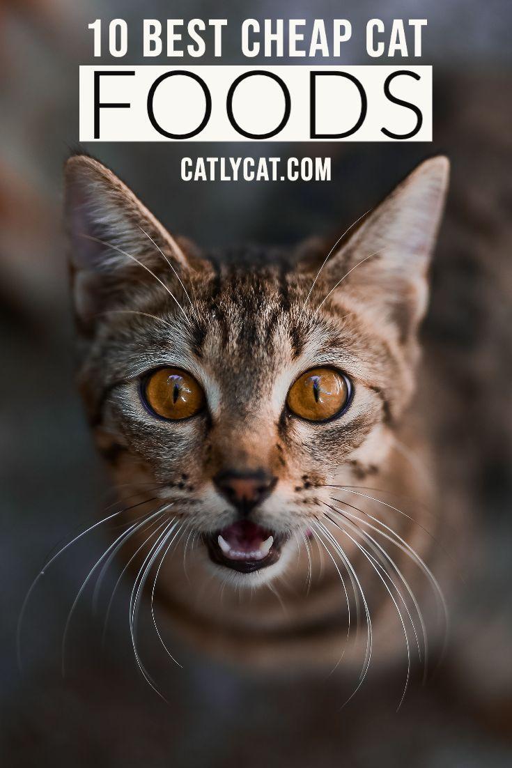 10 Best Cheap Cat Foods In 2020 Cat Breeds Cats Cheap Cat Food