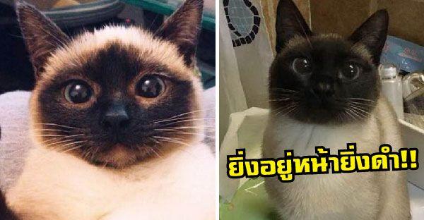 เจ าของส ดงงน กว าว เช ยรมาศป วย ย งอย หน าย งดำ หมอบอกเพราะสาเหต น Dog Vs Cat