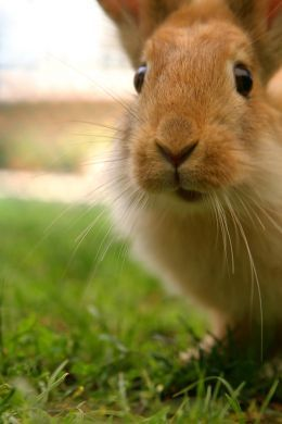 Make Your Bunny Happy! Five Things You Can Do For and With Your Pet Rabbit!