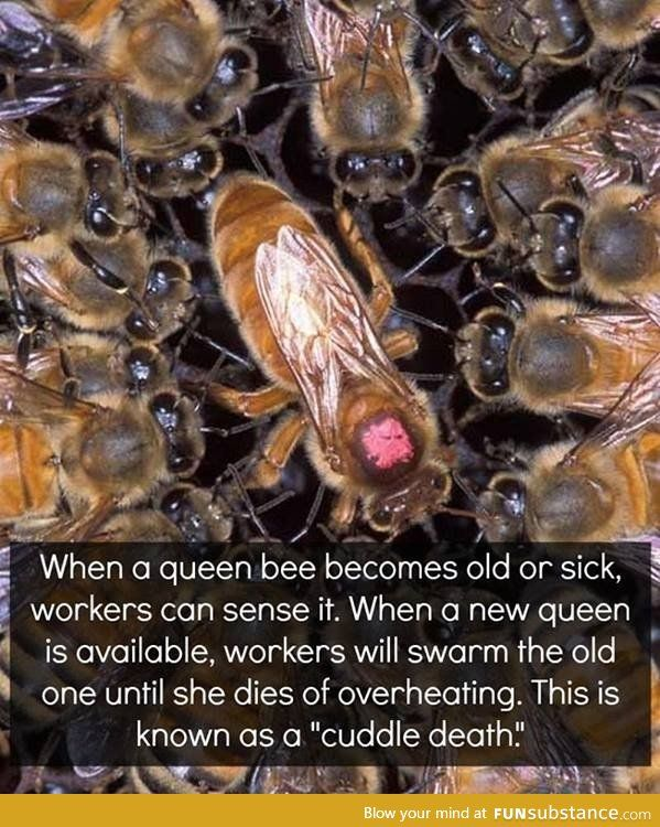Killing the Queen Bee. I don't really like this. Out with the old in with the new eh?