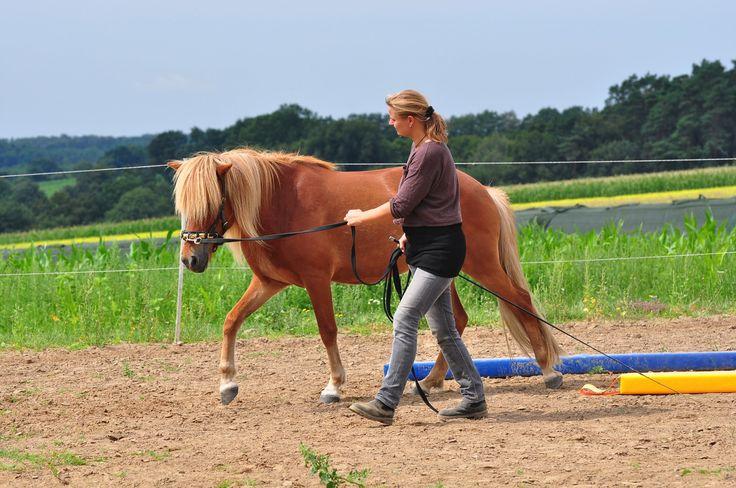 Bei diesem Kurs in Ahausen-Eversen (Niedersachsen, 18.-20.3.16) geht es um das Erlernen des Longieren am Kappzaum nach dem Longenkurs mit Babette Teschen.
