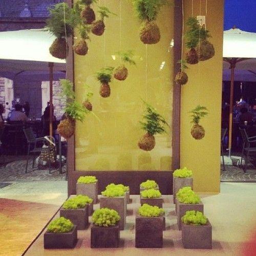 INSTALLAZIONE cemento / verde By Clo'eT per TOKYO RESTAURANT di Brescia, Piazza Duomo!  Serata inaugurale ...  Spettacolare!  # # Cloet cloetdesign # # tokyo tokyorestaurant # # installazioni installationart # # installationview installationgreen # design # cibo # # ristorante giapponese # brescia # piazzaduomo # design # # interni casa # # fresca concretedesign # # Italcementi cemento # felice # Esclusivo # architettura # sushi