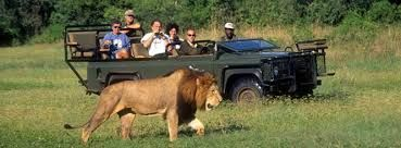 The African safari is all about realizing the experience of wildlife feel the worth of travel. Contact on 254 727478845 to choose packages for three days, five days, seven days Serengeti and Ngorongoro safari. http://www.east-africa-safari.com/serengeti-safaris.htm