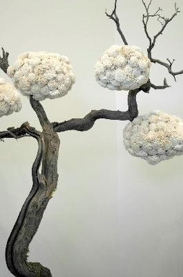 White flower balls and driftwood