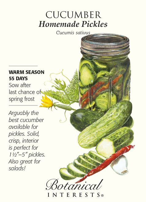 """Arguably the best cucumber for pickles, because the solid, crisp interior is perfect for 1 1/2"""""""" to 5"""""""" long pickles and has been bred for the purpose of pickling. Homemade Pickles cucumbers have exce"""