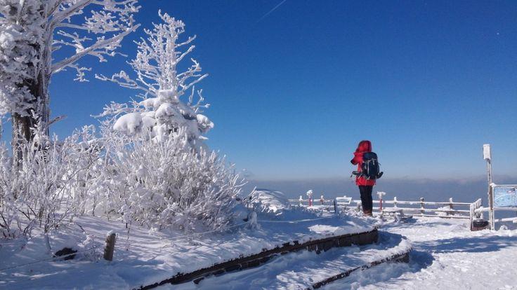 Daegwallyeong Winter Travel Mission Review (대관령 겨울여행 리뷰)