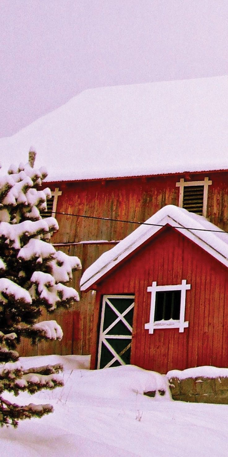 Thick blankets of snow at Christmas time in Geilo, Norway.