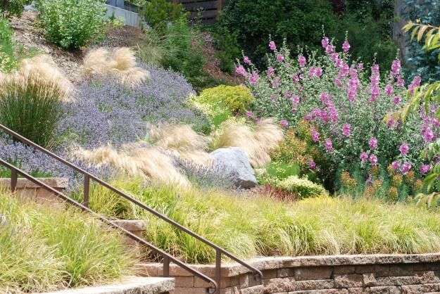 123 best images about hillside xeriscape on pinterest