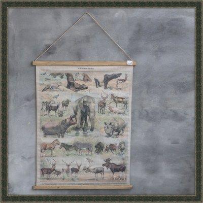 Schoolkaart dieren