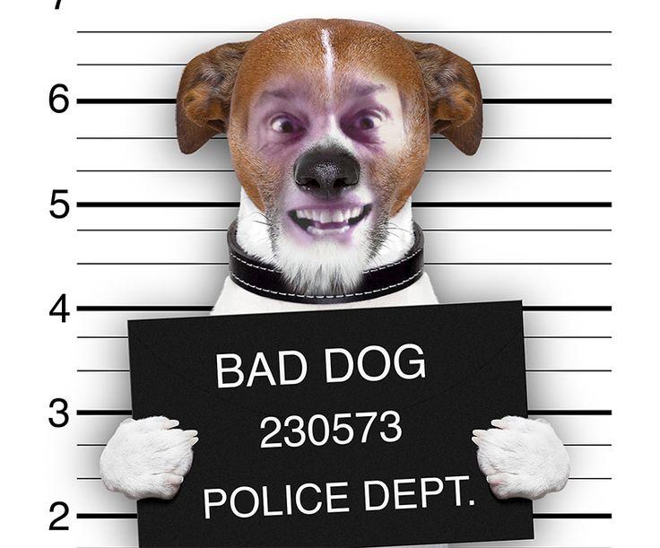 Bad Dog John