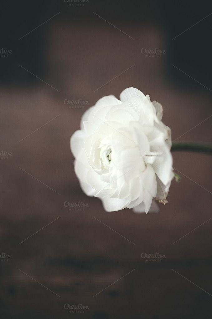 Single white flower on wood by rgarton on Creative Market