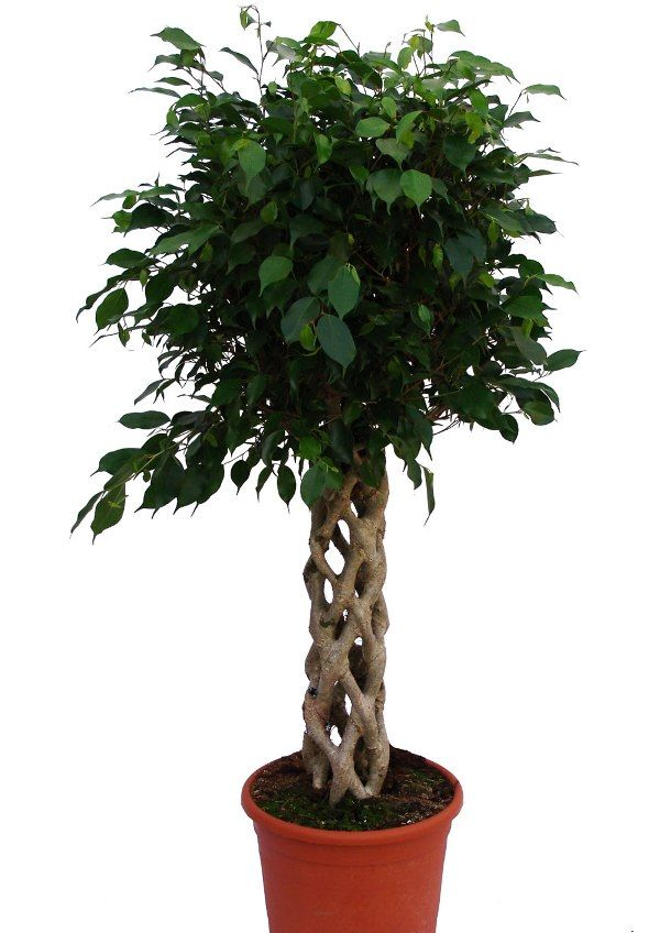 10-air-purifying-plants-for-your-home-&-office_09