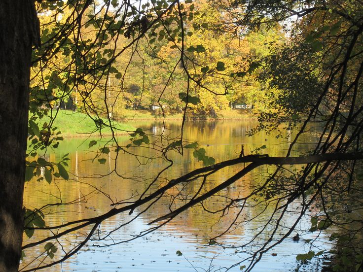 Picture of the lake from Central Park in Saint Petersburg, Russia