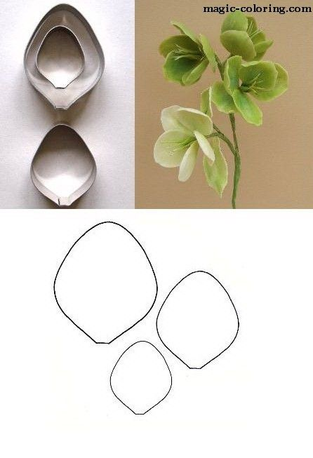 MAGIC-COLORING | Hellebore (Christmas rose) flower template