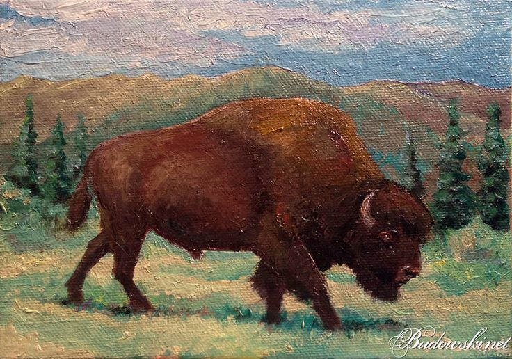 American Buffalo Oil Painting
