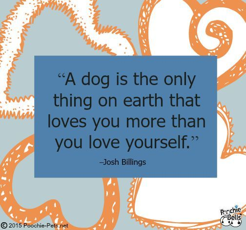 Pooch Inspiration | Dog Quotes #dogs #quotes #puppies