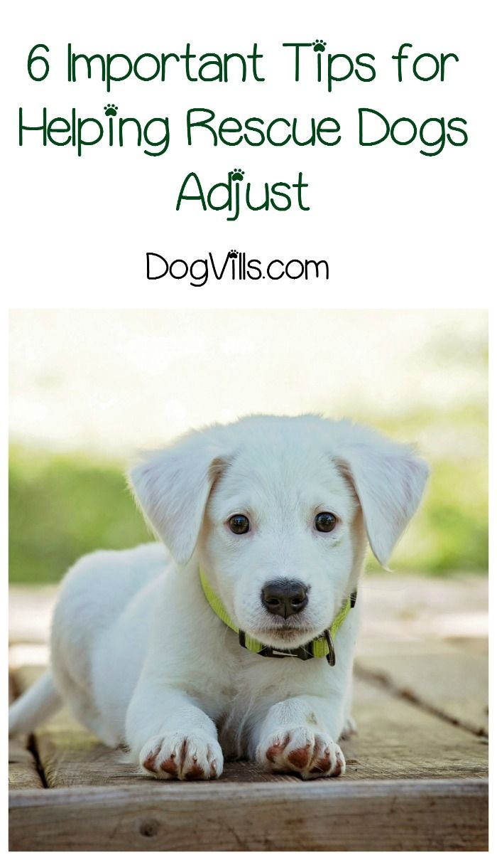 How Long Does It Take A Rescue Dog To Adjust
