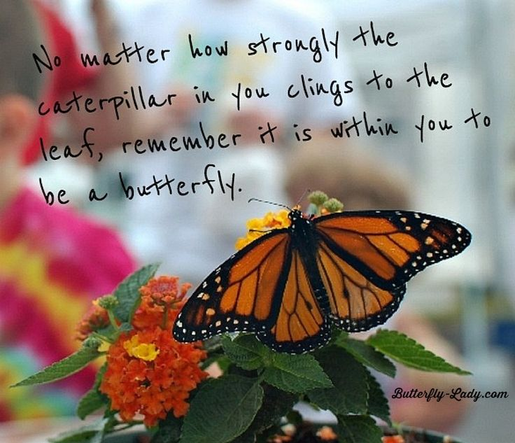 Spiritual Butterfly Quotes: 143 Best Butterfly Inspiration Images On Pinterest