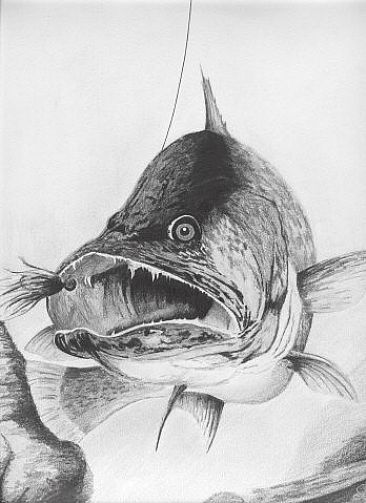 161 best images about eyez on pinterest walleye fishing