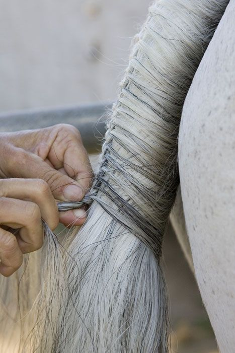 How to on Tail Braiding. Nothing prettier than a perfectly braided tail!.....makes me want to horse show :)