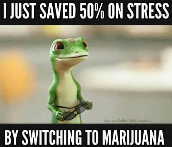 25 Best Geico Gecko Images On Pinterest
