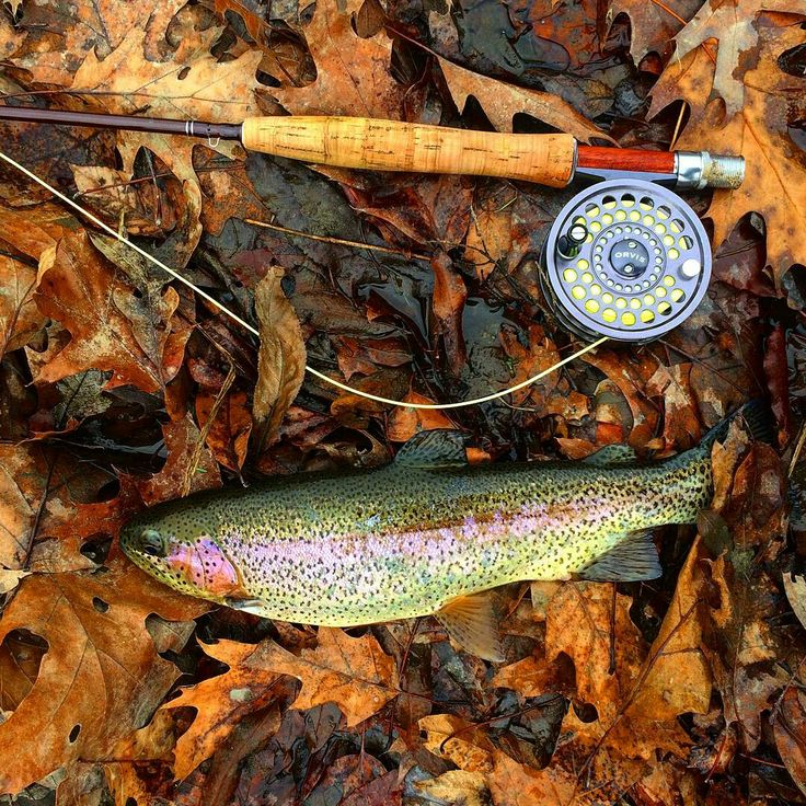 how to catch rainbow trout in the fall