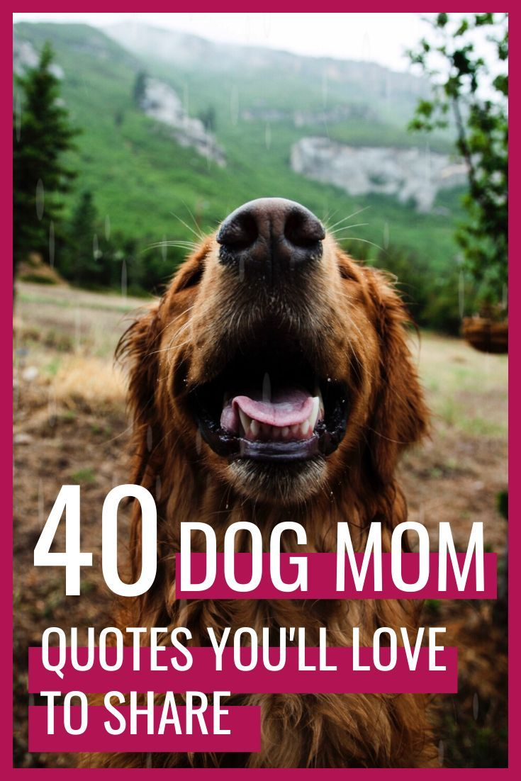 Pin On The Basic Dog Care Tips