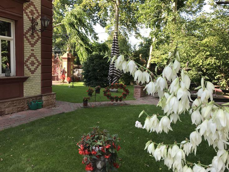 Csokoládé Múzeumban nyílnak a kertünk virágai.