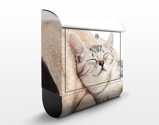#Briefkasten mit Zeitungsfach - Beste Freunde - Briefkasten mit Tiermotiv #tiere #animals #katzen #hunde #cats #dogs