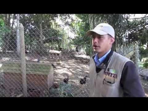 Los abonos orgánicos son ideales para aumentar la fertilidad de los suelos, puedes utilizar el estiércol que dan tus gallineros, animales de granja o el compost, ya que favorecen los suelos y a largo plazo son la mejor alternativa - mira este video:http://youtu.be/eIQBXI6myQI- #Huertas #Campo #CuidadoDePrados #MantenimientoFincas #Fincas #EspaciosVerdes #VivirEnElCampo