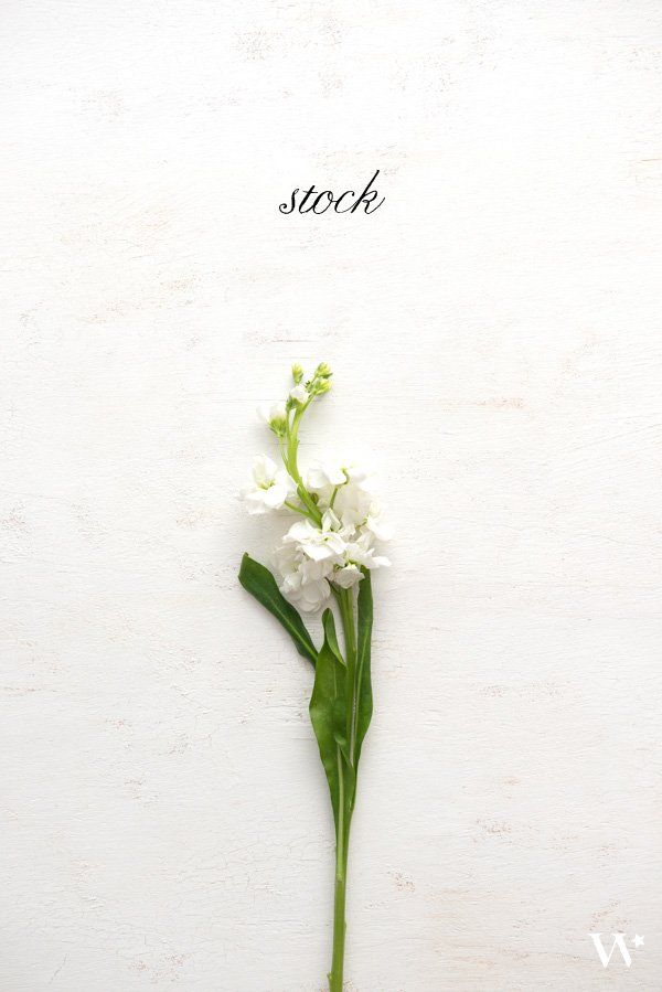 The Seasonal Flower Guide Series: Spring Florals