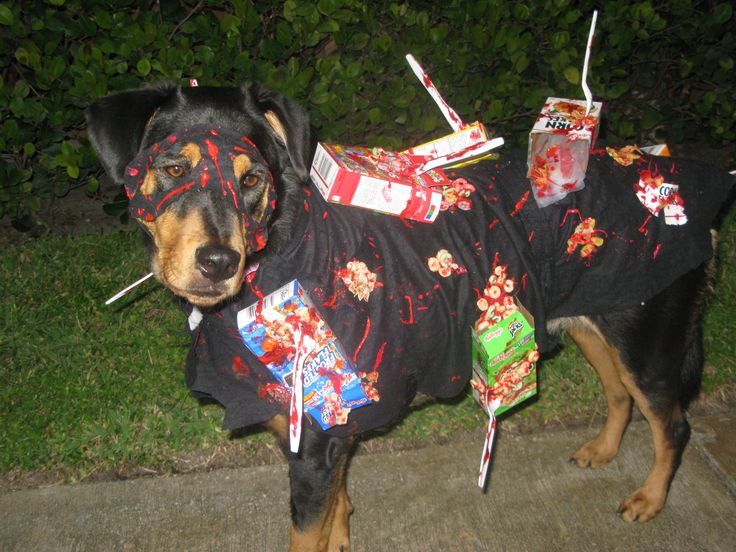 Best 25 cereal killer costume ideas on pinterest cereal killer cereal killer dog minus the paint all over his face awesome diy dog costume solutioingenieria Image collections