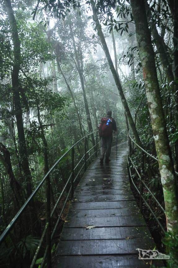 Caminhando por trilha suspensa em meio à vegetação densa da parte baixa do Parque Nacional da Serra dos Órgãos, no Rio de…