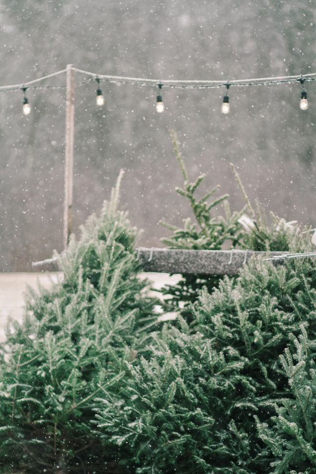 Garden Visit: A Christmas Tree Farm in Maine