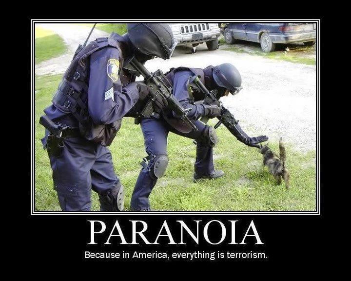 ALERTA ROJA!!! UN GATO TERRORISTA!!!!
