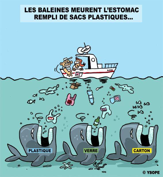 Baleines Et Sacs Plastiques Ysope Sac Plastique