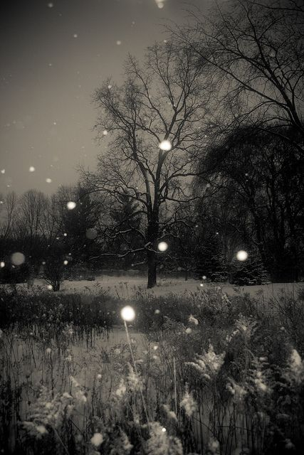 twilight snowfall by SolsticeSol on flikr