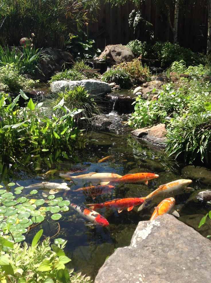73 best ponds fountains and garden waterfalls images on for Fish pond features