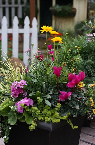 Happy Little Container Gardens