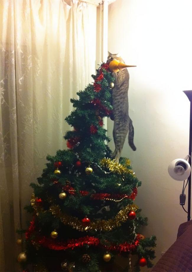 Фото: Веселые животные, которые хотели украсть Рождество