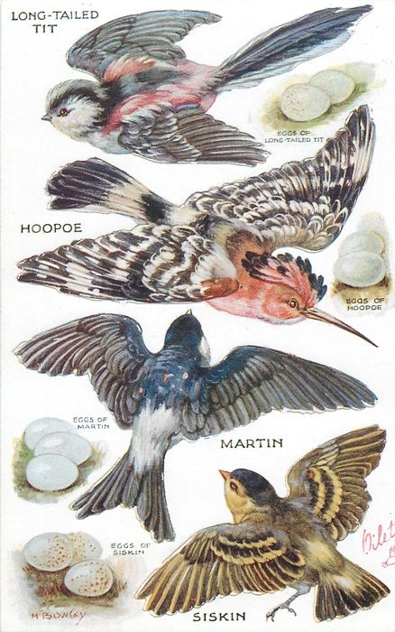 OILETTE, PRINTED IN ENGLAND, COPYRIGHT LONDON, pushouts, DIRECTIONS on back, same images not pushout 3324, AFTER THE ORIGINAL PAINTING BY M. BOWLEY.. listed in1930 POSTCARD Catalogue....LONG-TAILED TIT, HOOPOE, MARTIN, SISKIN & their eggs