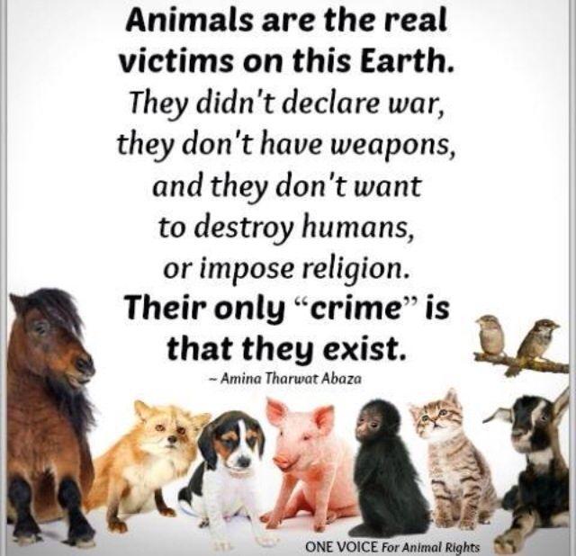 660 best Vegan images on Pinterest | Vegan memes, Vegan ...