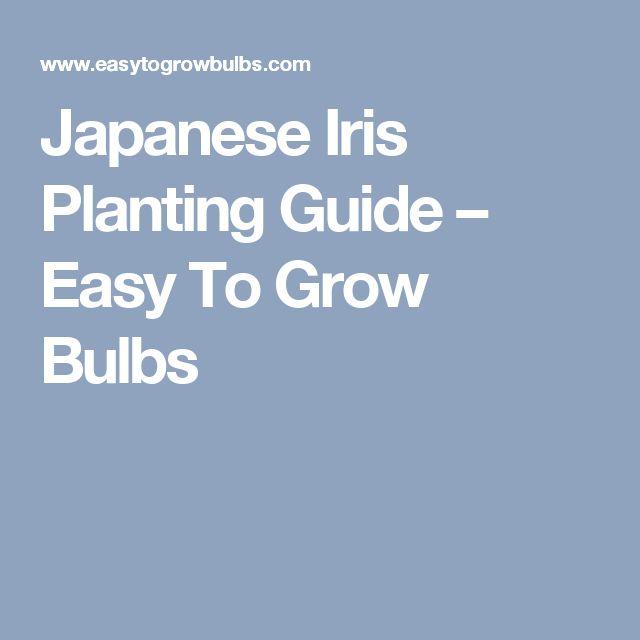 Japanese Iris Planting Guide – Easy To Grow Bulbs